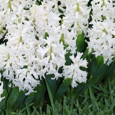 Planting Autumn Bulbs In Your Garden