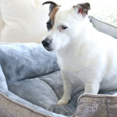 Luxury Lifestyle For Four Legged Friends – Coco & Pud