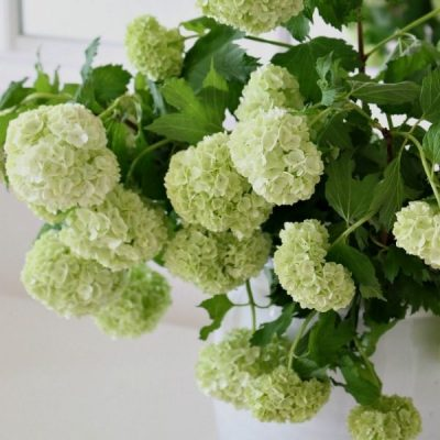 Decorating Your Kitchen With Foliage
