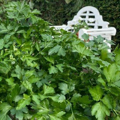 A Potager Garden